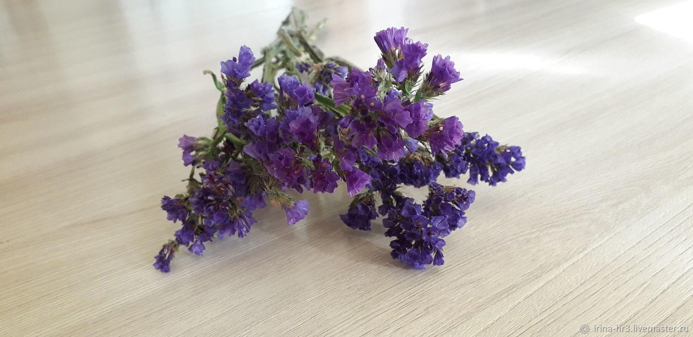 Статица. Сухоцветы, Цветы, Пятигорск,  Фото №1