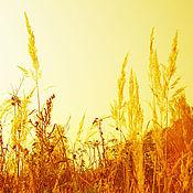 Картины и панно ручной работы. Ярмарка Мастеров - ручная работа Золотое поле. Handmade.