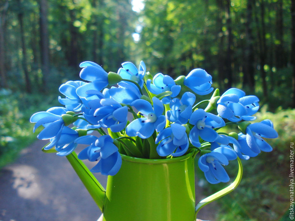 фото цветы пролески