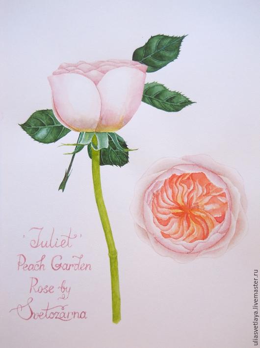 """Картины цветов ручной работы. Ярмарка Мастеров - ручная работа. Купить Роза """"Juliet"""" акварель. Handmade. Розовый, акварель"""