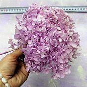 Сухоцветы ручной работы. Ярмарка Мастеров - ручная работа Гортензия стабилизированная сирене-розовая (целая шапка). Handmade.