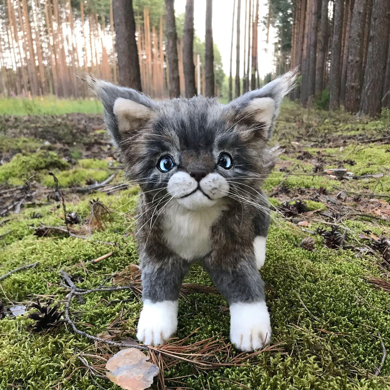 Котёнок Мейн Кун, Тедди Зверята, Москва,  Фото №1