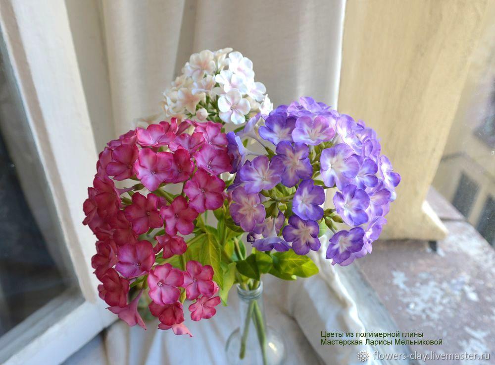 Доставка цветов флокс чита