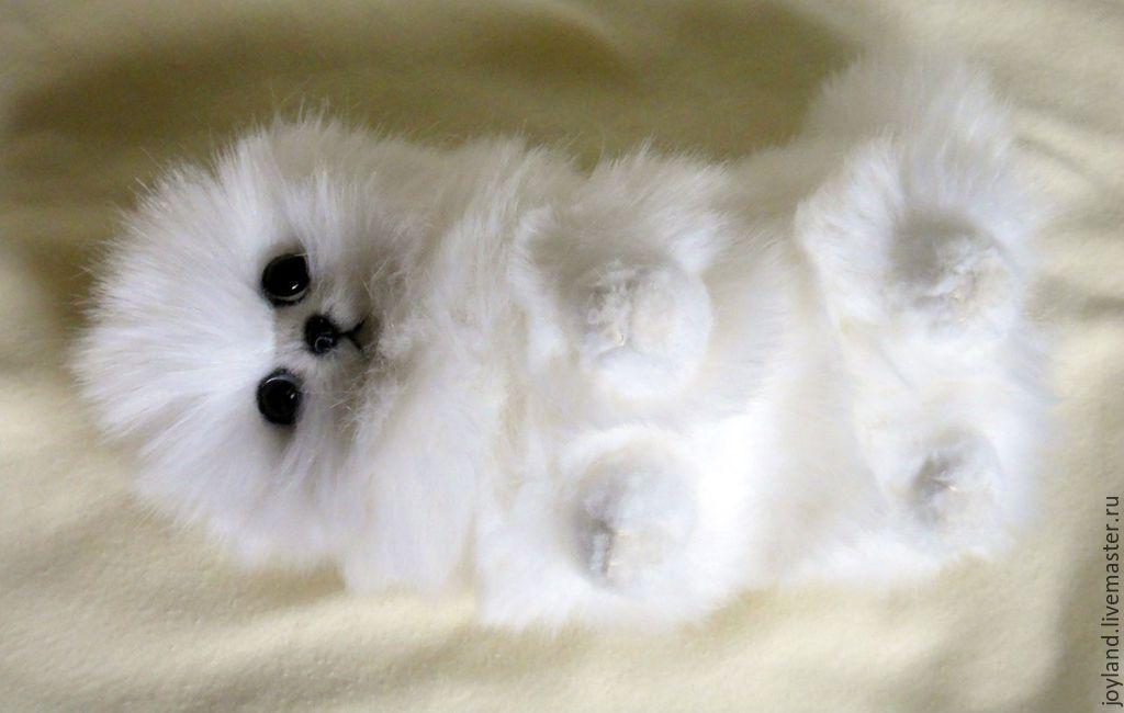 щенки шпица с рождения фото