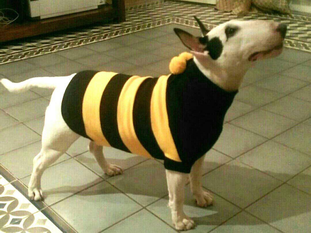 Одежда для собак xl размер