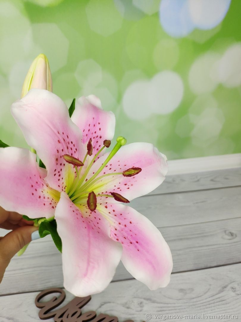 Цветок лилия мария