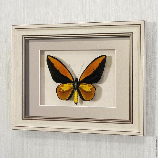 Абстракция ручной работы. Ярмарка Мастеров - ручная работа. Купить Бабочка Золотая Птицекрылка Крез. Handmade. Желтый, картина с бабочками