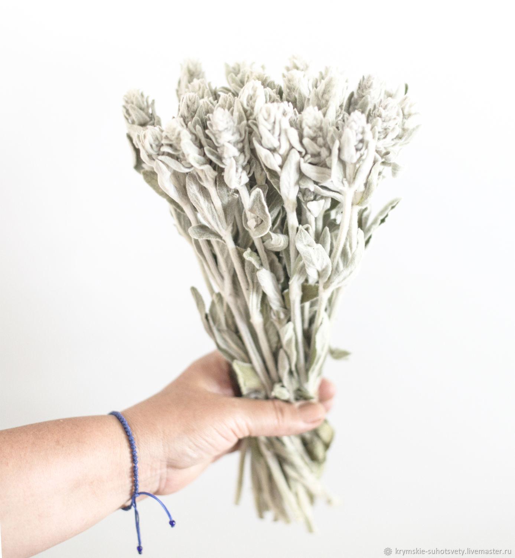 Чистец сухоцвет, Букеты, Бахчисарай,  Фото №1