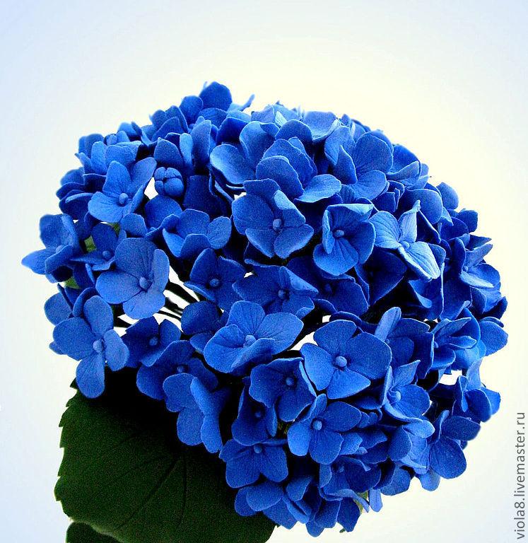 Цветы ул. гортензия голубая заказать