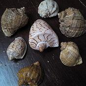 Винтаж handmade. Livemaster - original item vintage Souvenirs: Seashells. Handmade.
