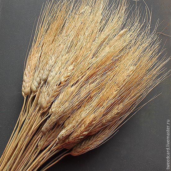 """Колосья пшеницы с """"усиками"""", 10 шт, разные цвета, Сухоцветы, Санкт-Петербург,  Фото №1"""