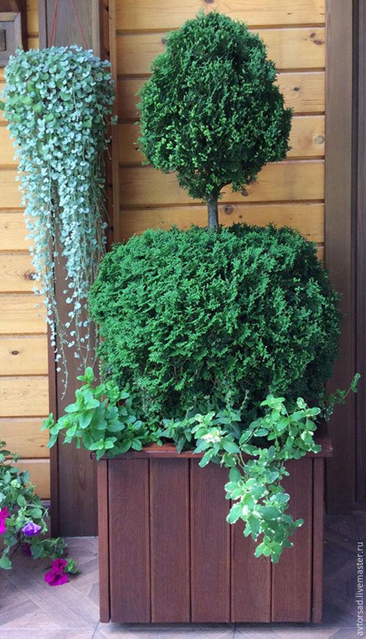 Деревянный горшок для растений