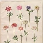 Flowers (flol) - Ярмарка Мастеров - ручная работа, handmade