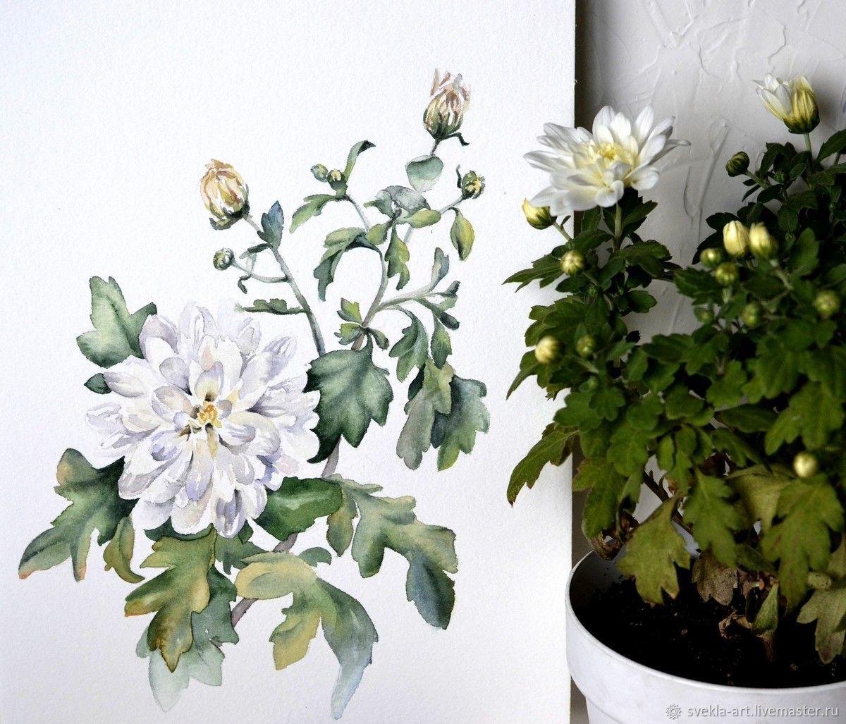 """Картина Акварелью """"Белые хризантемы"""", Картины цветов, Канск, Фото №1"""
