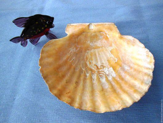Винтажные предметы интерьера. Ярмарка Мастеров - ручная работа. Купить Раковина большая  морская жемчужина. Handmade. Комбинированный, ракушка морская