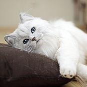 Мягкие игрушки ручной работы. Ярмарка Мастеров - ручная работа Британская длинношерстная кошка в стиле тедди натюр. Handmade.