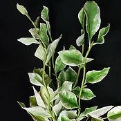 Цветы и флористика handmade. Livemaster - original item Hierbas para ramos de arcilla polimérica. Handmade.