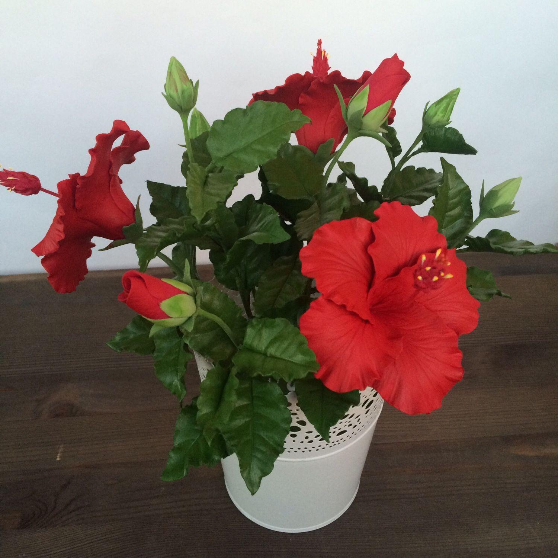 Цветок гибискус фото комнатный