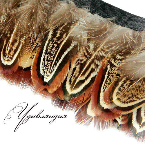 Другие виды рукоделия ручной работы. Ярмарка Мастеров - ручная работа. Купить Перо фазана на ленте, натуральное, неокрашенное №50.. Handmade.