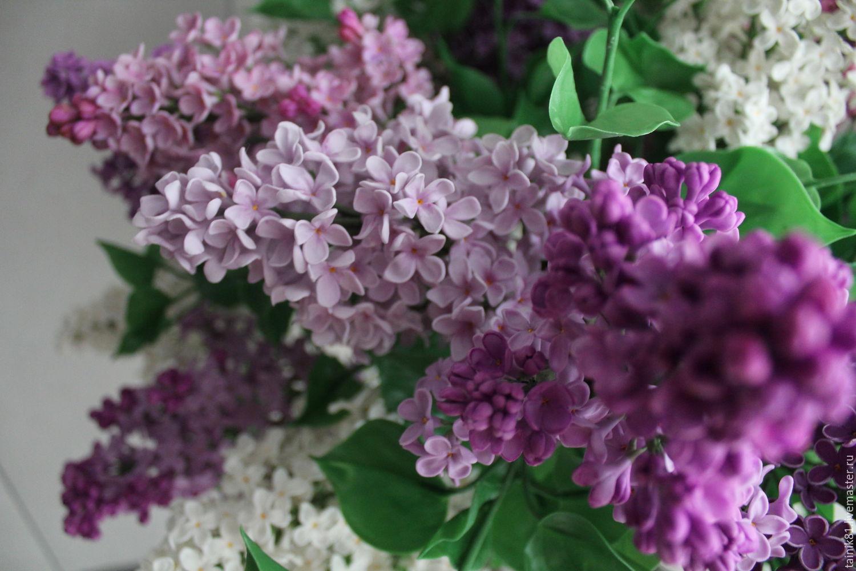 Картинки цветов в вазе