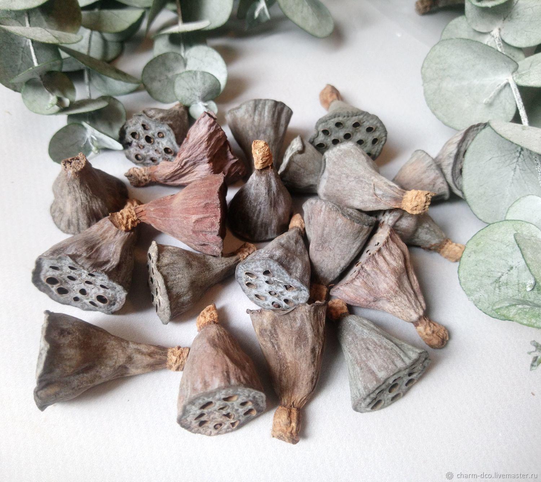 Коробочки лотоса сухоцвет 1.5-2.5см уп 20шт, Сухоцветы для творчества, Санкт-Петербург,  Фото №1