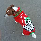 Для домашних животных, handmade. Livemaster - original item Jumpsuit for Jack Russell Terrier (2). Handmade.
