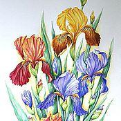 """Картины и панно ручной работы. Ярмарка Мастеров - ручная работа Картина """"Разноцветные ирисы"""" акварель. Handmade."""