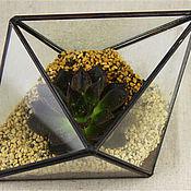 """Для дома и интерьера ручной работы. Ярмарка Мастеров - ручная работа Флорариум """"октаэндр""""для растений и декора. Handmade."""