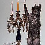 Ксюша Фролова (Anaskopictures) - Ярмарка Мастеров - ручная работа, handmade