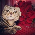 Карина (brown-cat) - Ярмарка Мастеров - ручная работа, handmade