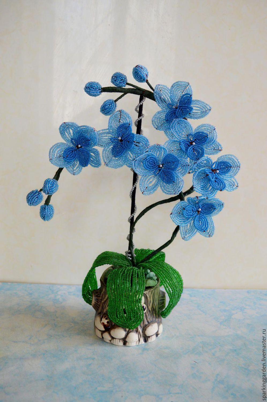 Голубая орхидея, Цветы, Ессентуки,  Фото №1