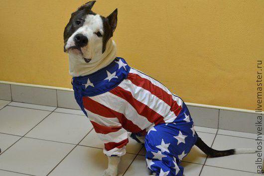 """Одежда для собак, ручной работы. Ярмарка Мастеров - ручная работа. Купить Костюмчик для """"Скайки"""". Handmade. Одежда для собак, Плащёвка"""