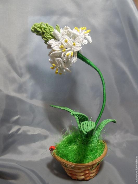 Цветы ручной работы. Ярмарка Мастеров - ручная работа. Купить Птицемлечник из бисера. Handmade. Комбинированный, цветок ручной работы