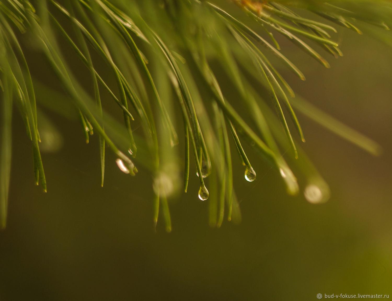Фотокартина капли дождя, Фотокартины, Москва,  Фото №1