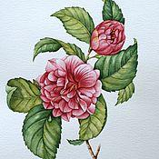 """Картины и панно ручной работы. Ярмарка Мастеров - ручная работа Рисунок """"Розовая камелия"""" акварель. Handmade."""