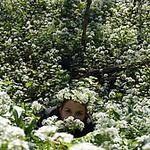 """Бусинки Жежи """"Ставрополь"""" (biserok-hm) - Ярмарка Мастеров - ручная работа, handmade"""