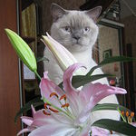 Магазинчик Белого котика - Ярмарка Мастеров - ручная работа, handmade