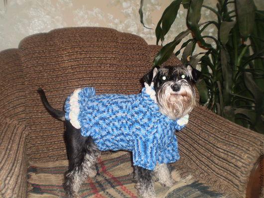 Одежда для собак, ручной работы. Ярмарка Мастеров - ручная работа. Купить свитер для собаки. Handmade. Животные, красота  уют  тепло