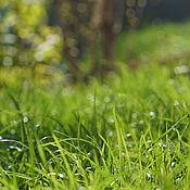 Картины и панно ручной работы. Ярмарка Мастеров - ручная работа ОДА ЖИЗНИ ... ( авторская фотокартина для интерьера). Handmade.