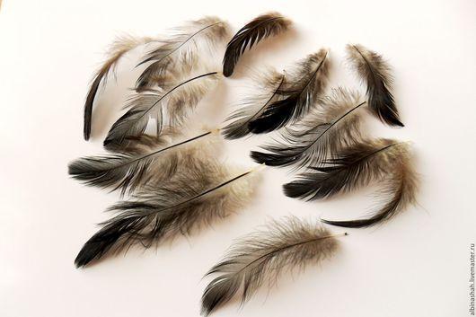 Другие виды рукоделия ручной работы. Ярмарка Мастеров - ручная работа. Купить Набор черных перьев петуха. Handmade. Черный