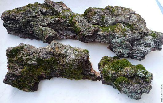 Натуральная кора березы с мхом. Природный материал для флористических работ. Кора крупного дерева, интересная фактура поросшая мхом. Палочка-выручалочка.