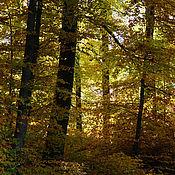 Картины и панно ручной работы. Ярмарка Мастеров - ручная работа Фотография Осенняя пора. Handmade.