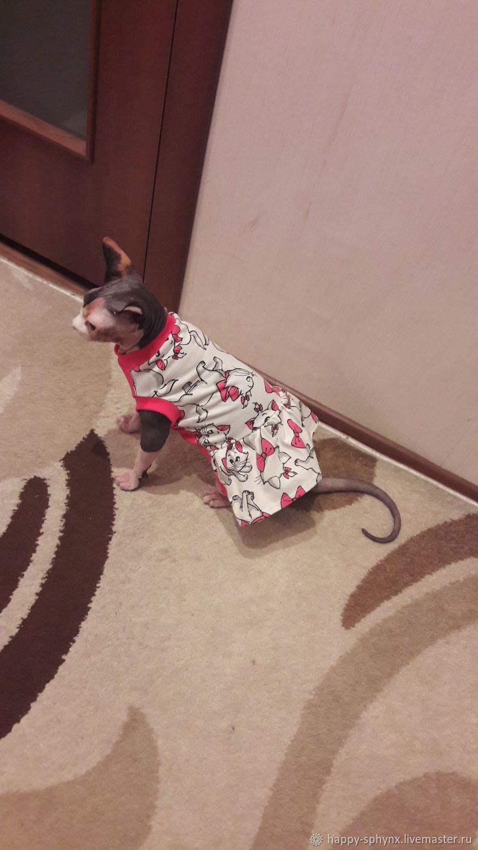 """Одежда для кошек  майка-платье """"Красотка"""", Одежда для питомцев, Бийск, Фото №1"""