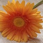 Decor Flower (orangeflower) - Ярмарка Мастеров - ручная работа, handmade