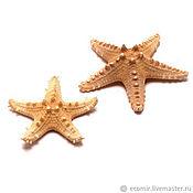 Ракушки ручной работы. Ярмарка Мастеров - ручная работа Звезды морские натуральные (разные размеры). Handmade.