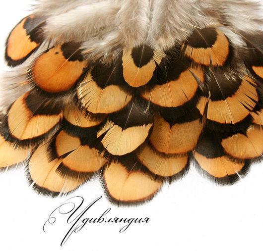 Другие виды рукоделия ручной работы. Ярмарка Мастеров - ручная работа. Купить Перо фазана натуральное, неокрашенное №38.. Handmade.