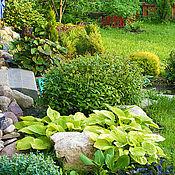 Дизайн и реклама ручной работы. Ярмарка Мастеров - ручная работа Цветник с хвойными и декоративно-лиственными растениями. Handmade.