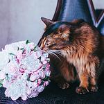 ELiza - Ярмарка Мастеров - ручная работа, handmade
