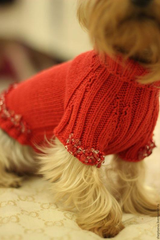 Одежда для собак, ручной работы. Ярмарка Мастеров - ручная работа. Купить Красный свитер для маленькой собачки из мериноса с. Handmade. животные