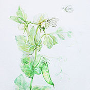 Картины и панно handmade. Livemaster - original item Peas in bloom, watercolor. Handmade.